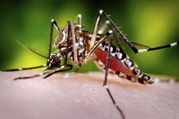 危険な生物!1年間で最も多く人の命を奪うものとは?